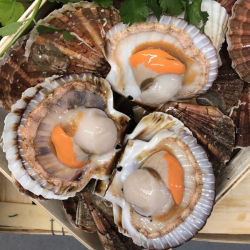 2kg Coquilles St-Jacques...