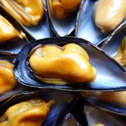 Moules Morisseau® - lot de 1kg